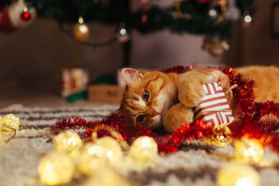 Arthrose Katze Schnurren